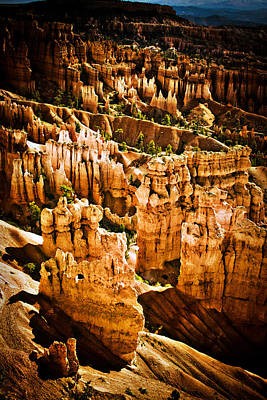 Photograph - Bryce Canyon Vertical Image by James BO  Insogna