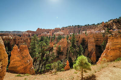 Photograph - Bryce Canyon Vista by Margaret Pitcher