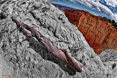 Photograph - Bryce Drought Log Black White by Blake Richards