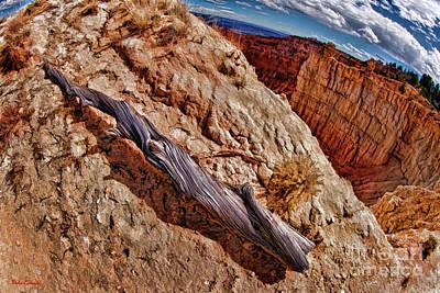 Photograph - Bryce Drought Log by Blake Richards