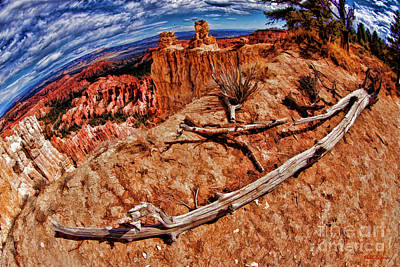 Photograph - Bryce Drought Tree by Blake Richards