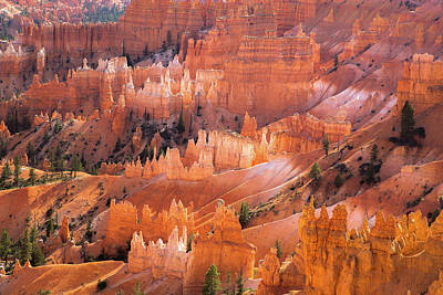 Photograph - Bryce Glow by Jay Moore
