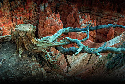 Photograph - Bryce National Canyon Tree Stump On A Ridge by Randall Nyhof