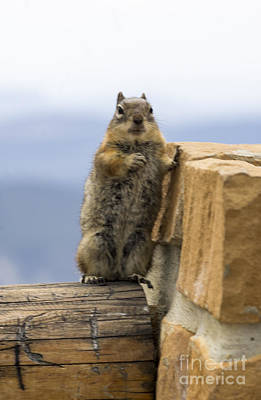 Photograph - Bryce Squirrel by Louise Magno