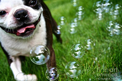 Photograph - Bubble Busting by Susan Herber