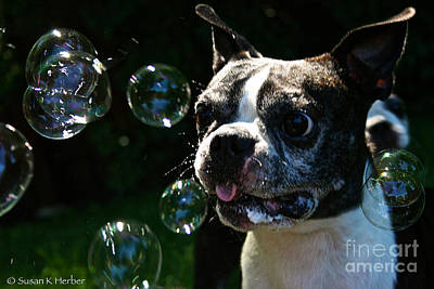 Photograph - Bubble Monster by Susan Herber