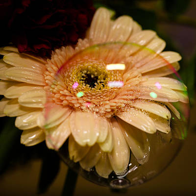 Photograph - Bubbled Daisy by David Patterson