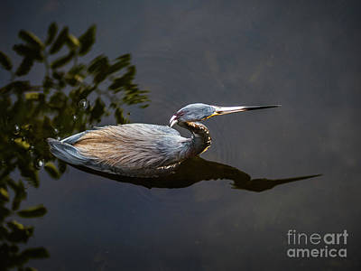 Photograph - Bubbles And A Blue Heron by Robin Zygelman