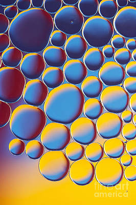 Photograph - Bubbly by Tim Gainey