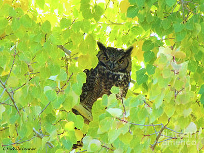 Photograph - Bubo Virginianus by Michele Penner