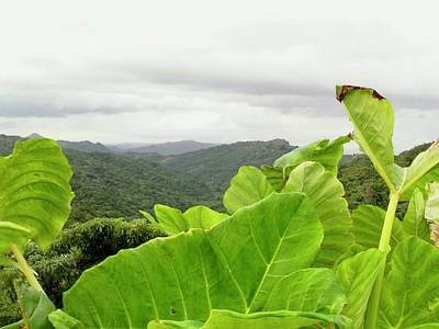 Photograph - Bucarabones Maricao by Walter Rivera Santos
