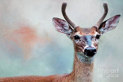 Photograph - Buck Deer Portrait by Bill And Deb Hayes