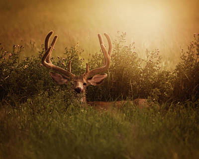 Photograph - Buck by Erica Kinsella