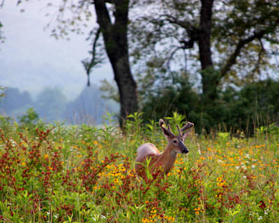 Photograph - Buck In Berries by Kevin Myers