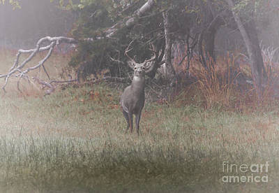 White-tailed Buck Photograph - Buck In Foggy Bottoms by Robert Frederick