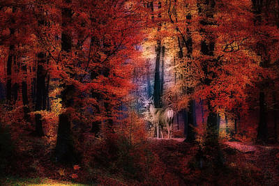 Digital Art - Buck In The Autumn Woods by Diane Schuster