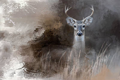 Photograph - Buck In The Shadows by Jai Johnson