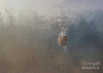 Missouri Whitetail Photograph - Buck In The Snow by Sandy Potere