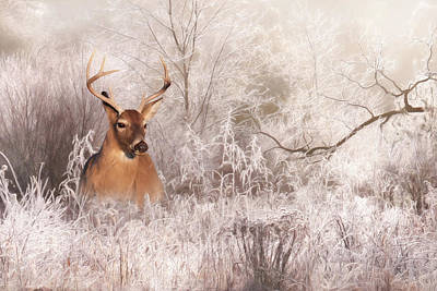 Buck In Winter Art Print by Lori Deiter