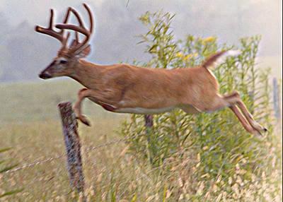 Buck Jumping Fence Art Print by Steve Carpenter