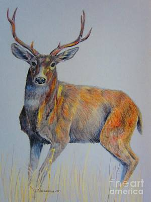 Drawing - Buck by Laurianna Taylor