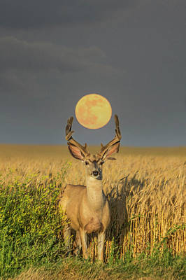 Photograph - Buck Moon  by Aaron J Groen
