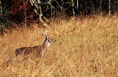 Photograph - Buck On The Lookout by Carol Montoya