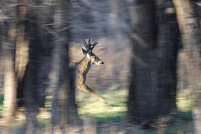 Buck Running Thru The Woods Art Print by Ernie Echols