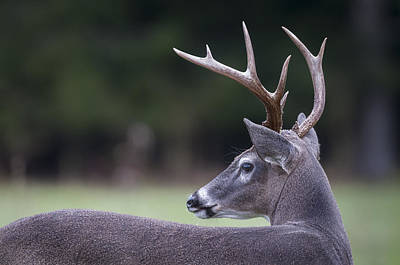 Photograph - Buck by Tyson and Kathy Smith
