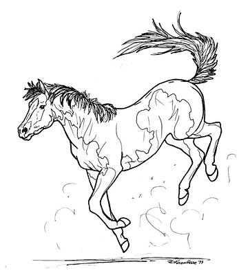 bucking horse drawing buckaroo by karen hesse