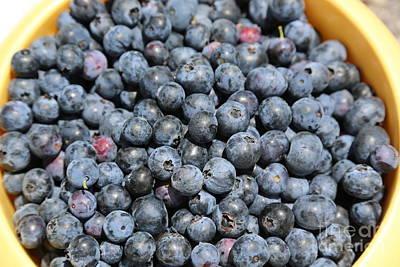 Photograph - Bucket Of Blueberries by Carol Groenen