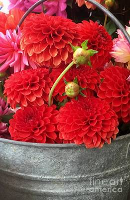 Photograph - Bucket Of Red Dahlias by Susan Garren