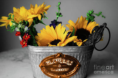 Photograph - Bucket Of Sunflowers by Diana Mary Sharpton