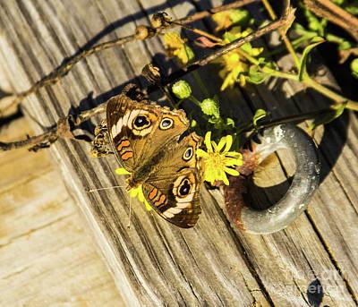 Photograph - Buckeye Beauty by Steven Parker