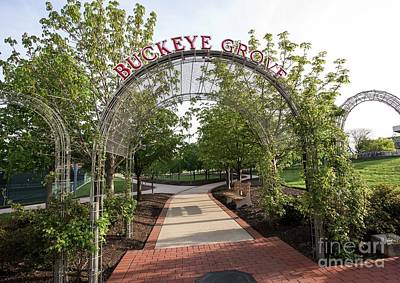 Photograph - Buckeye Grove by David Bearden