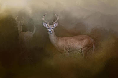 Bucks In August Art Print