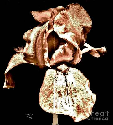 Buckskin Iris Original by Marsha Heiken