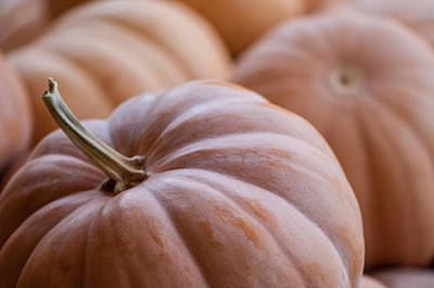 Photograph - Buckskin Pumpkin by Brian Green