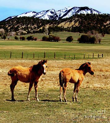 Photograph - Buckskin Quarter Horse Colts by Dale E Jackson