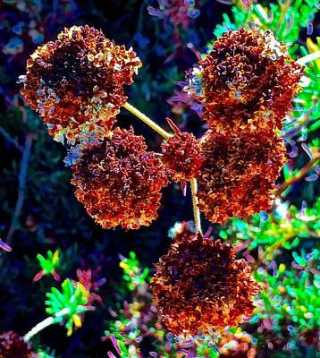 Eriogonum Photograph - Buckwheat Fall Color V2 by Scott L Holtslander