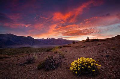 Eriogonum Photograph - Buckwheat Sunset by Dan Holmes