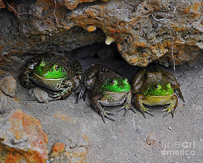 Bud Bullfrogs Art Print by Al Powell Photography USA