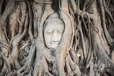 Buddha Head At Wat Mahatat Temple Art Print by MotHaiBaPhoto Prints