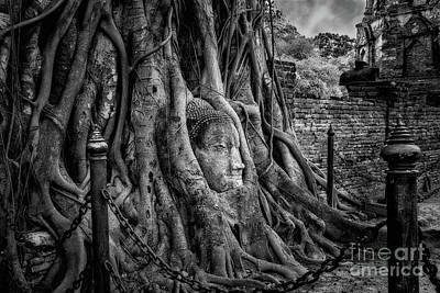 Photograph - Buddha Head Ayutthaya by Adrian Evans