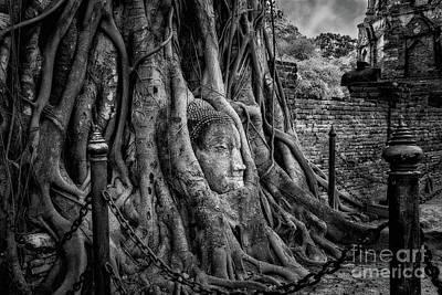 Photograph - Buddha Head Ayutthaya by Adrian Evans