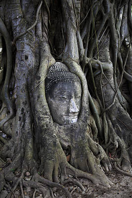 Buddha Statue Photograph - Buddha Head In Tree by Adrian Evans