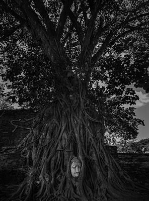 Buddha's Head Entwined In Banyan Tree Roots Art Print by Dylan Newstead