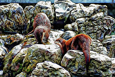 Digital Art - Buddies On The Rocks by Dorothy Berry-Lound