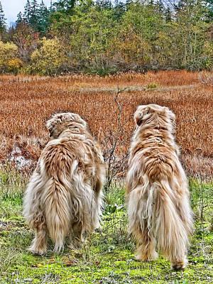 Photograph - Buddies by Rhonda McDougall