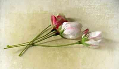 Budding Blossom Art Print by Jessica Jenney